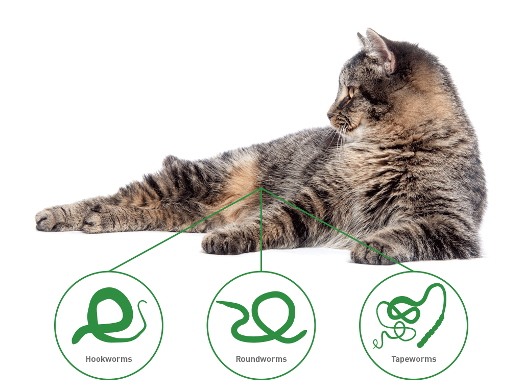 Dronspot - spot-on wormer for cats