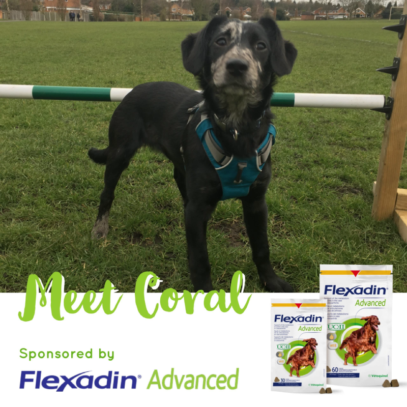 Flexadin Advanced Sponsored Dog Coral
