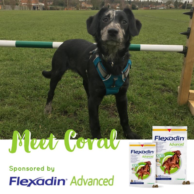 Flexadin Advanced Sponsored Dog Coral