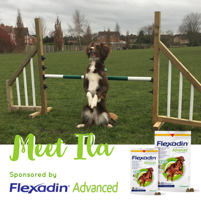 Flexadin Advanced Sponsored Dog Ila
