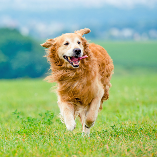 Blogs about physical well being for your pet - VetoquinolPet