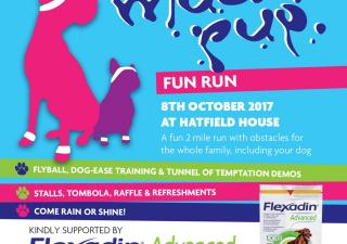 Mucky Pup Fun Run at Hatfield House Oct 2017