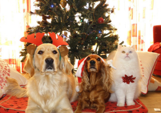Christmas Pet Safety - Dogs and Cats