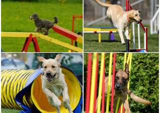 tips on getting started with dog agility