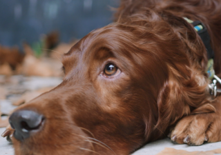 Dog osteoartritis - what to do