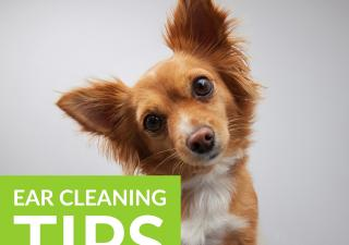Ear Cleaning Top Tips