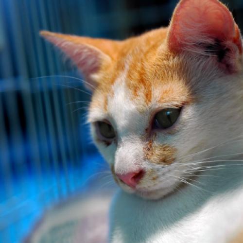 Getting a Rescue Cat - Vetoquinol UK